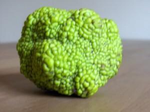 baumfrucht